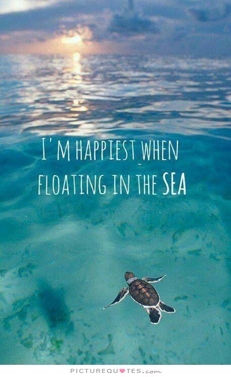 Shell Near Me >> Romantic Sea Quotes. QuotesGram