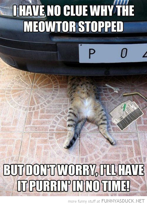 Funny Cat Mechanic Purring No Time Pics on Auto Mechanic Car Repair