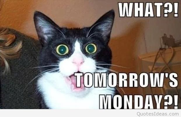 Tomorrow Funny Quotes Quotesgram: Funny Monday Quotes Tomorrow. QuotesGram