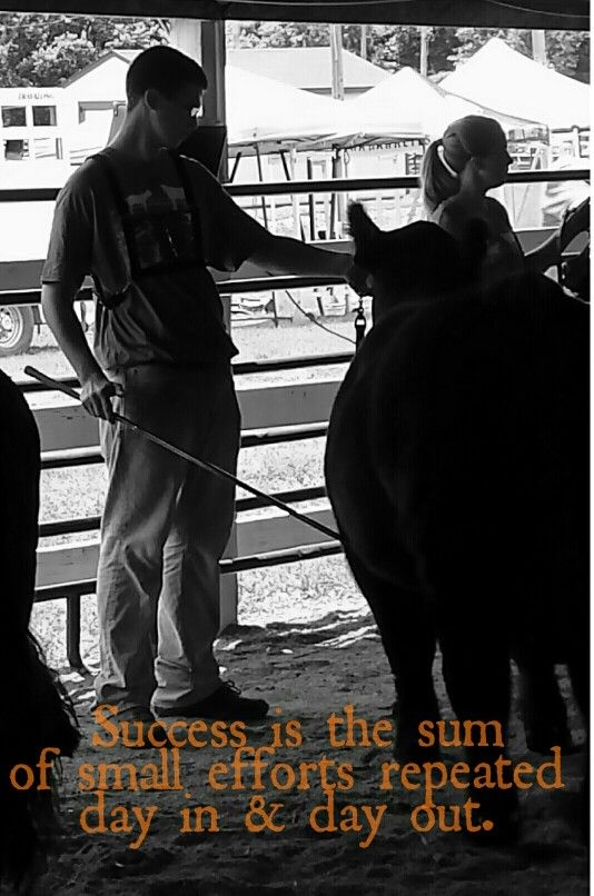 Show Steer Quotes Quotesgram