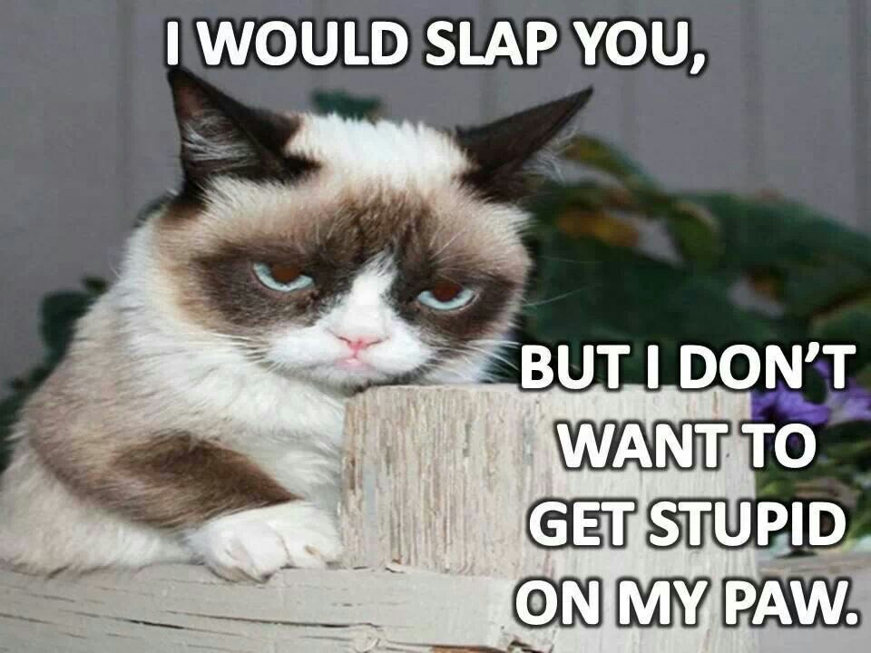 Grumpy Kitty Awesome Quotes. QuotesGram