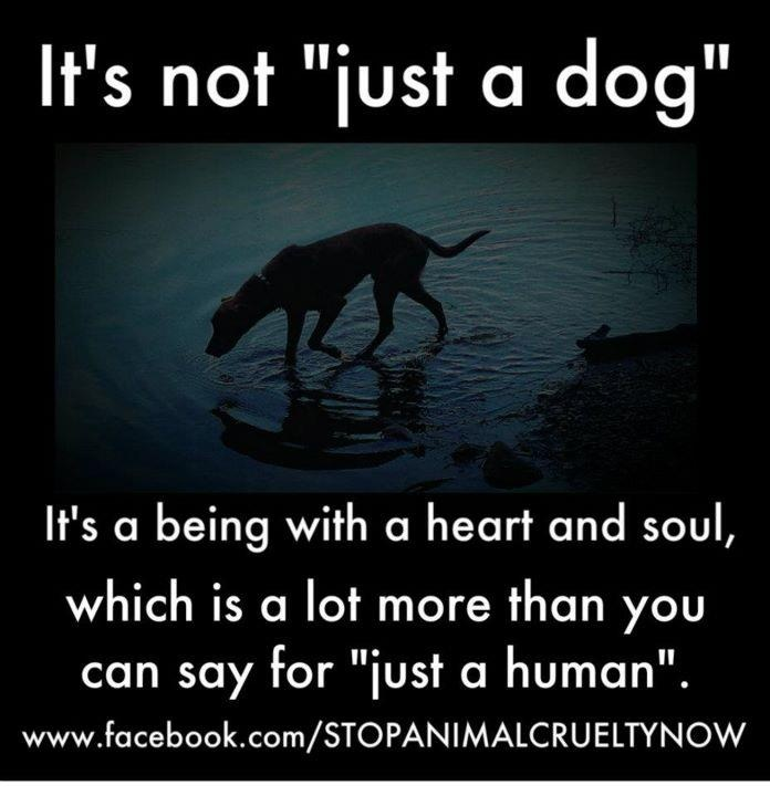 Dog Angel Quotes: Dogs Are Angels Quotes. QuotesGram