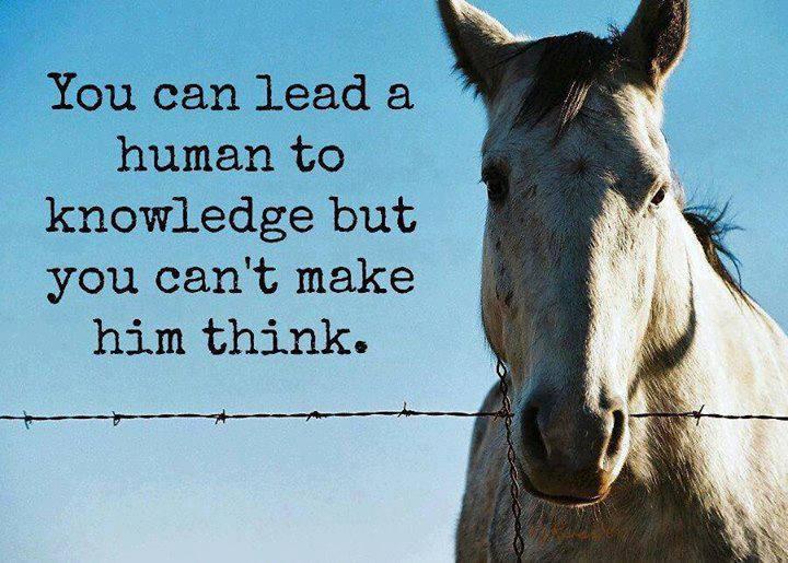 Horse Wisdom Quotes. QuotesGram
