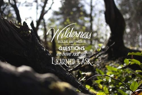 Forest Quotes. QuotesGram
