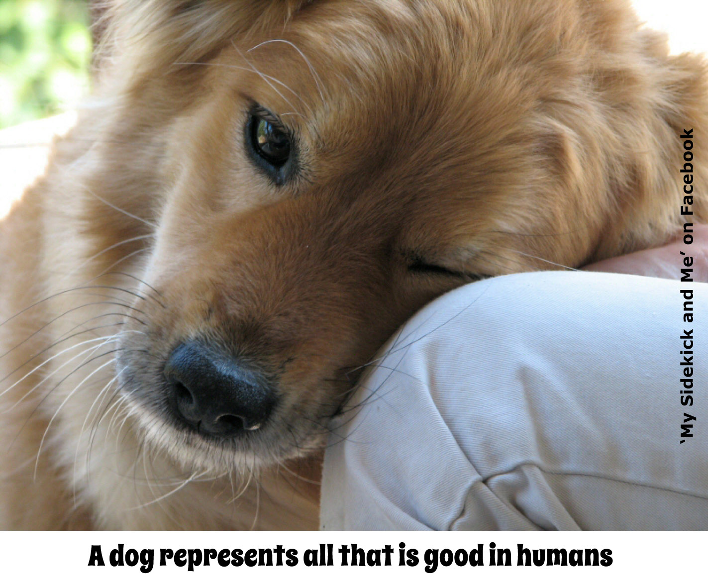 Dog Quotes Wallpapers Quotesgram