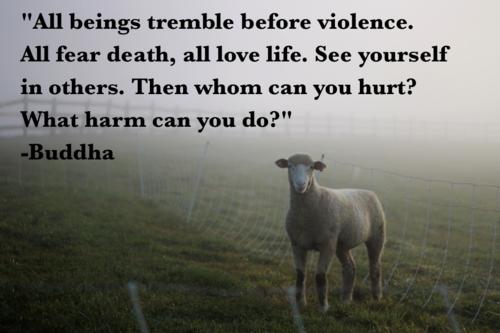 buddha animal quotes quotesgram