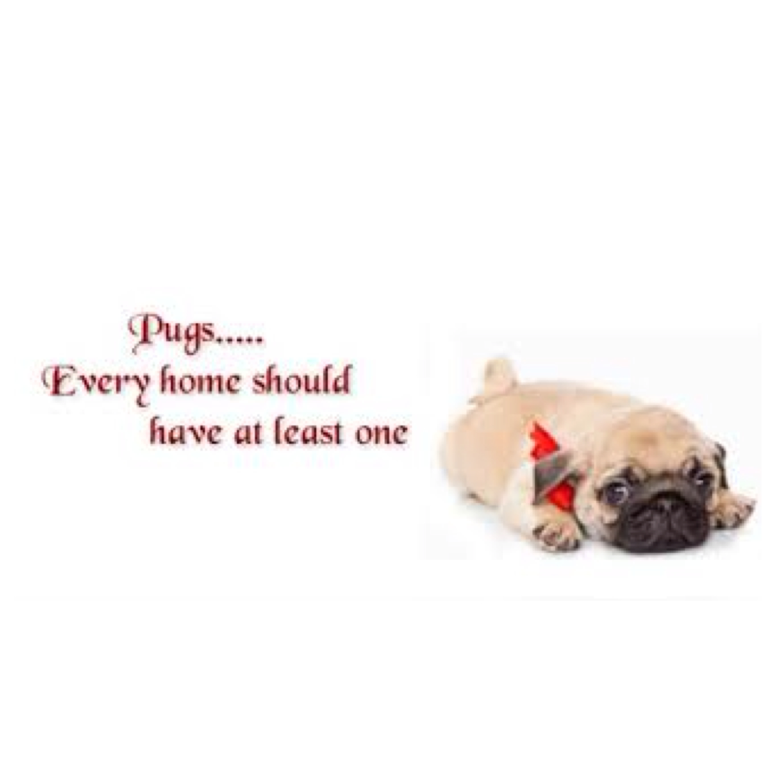 pug poems pug quotes and poems quotesgram 5176