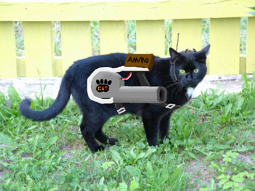 Cat Gun Quotes Quotesgram