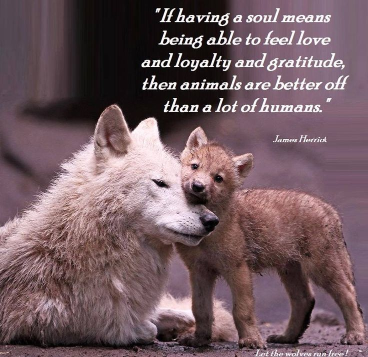 Love Animal Quotes: Peace And Love Animals Quotes. QuotesGram