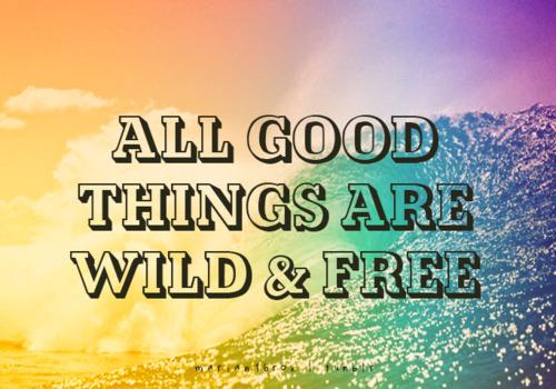 Wild At Heart Quotes Quotesgram: Wild About Quotes. QuotesGram
