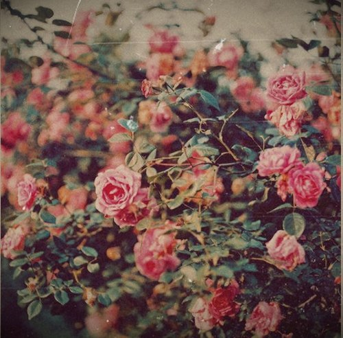 Vintage Flower Tumblr Quotes Wallpaper Wide » Outdoors ...  Vintage Flower Wallpaper Tumblr Quotes