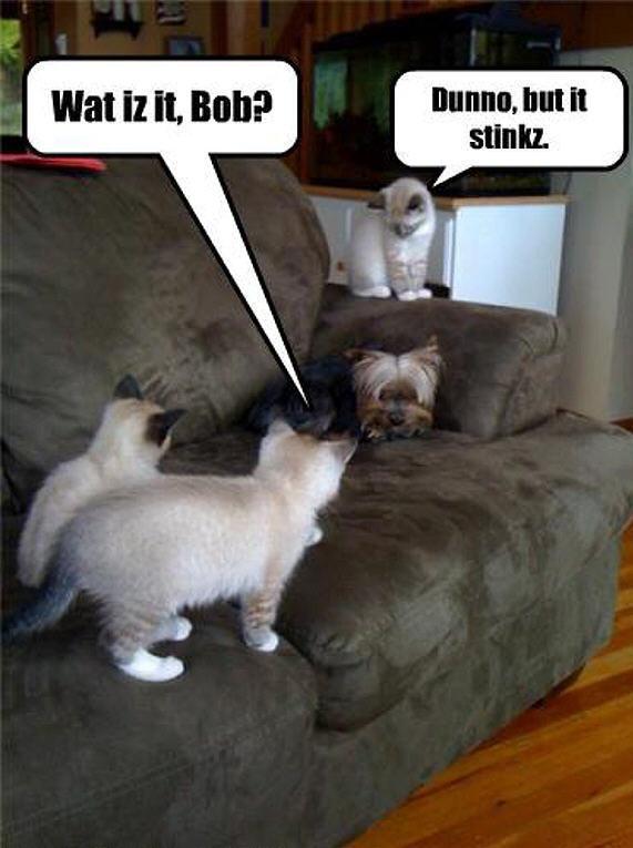serious cat memes
