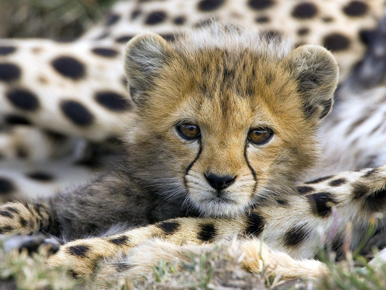Cute Baby Animal Quotes. QuotesGram