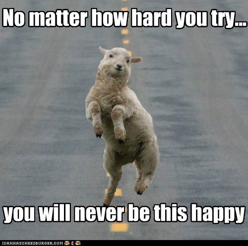 Funny Pictures With Captions Clean With Animals Funny Animal Pi...