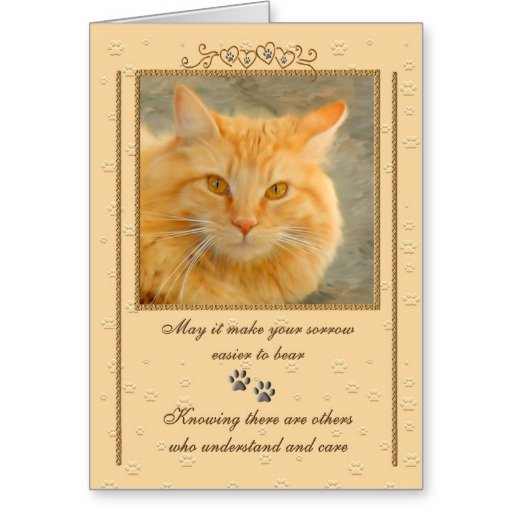 Sympathy Quotes For Loss Of Pet Cat