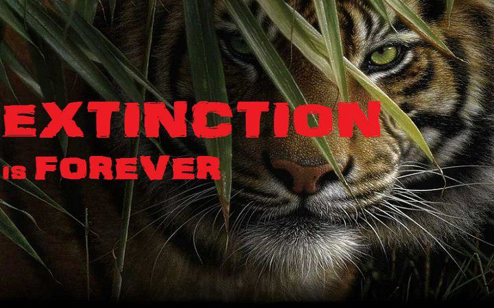 animals extinction Often perceived today as a detached, artificial and random threat, trapped in deep geological time or areas of the earth that we have little contact or relationship with, extinction is in fact an ever-present force that looms over all life.
