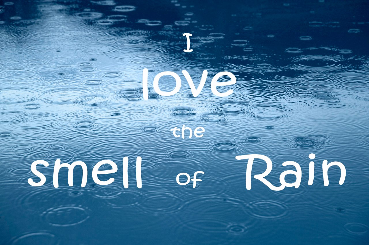Funny Rain Quotes And Sayings Quotesgram