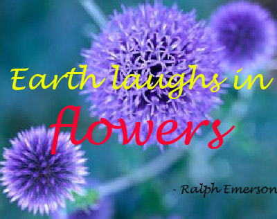 Flowers And Nature Quotes Quotesgram. Friday Night Lights Quotes. Disney Quotes T Shirts. Travel Quotes Calligraphy. Birthday Quotes Lover. Dr Seuss Quotes On Babies. Inspirational Quotes Pope Benedict Xvi. Family United Quotes. Success Quotes Gym