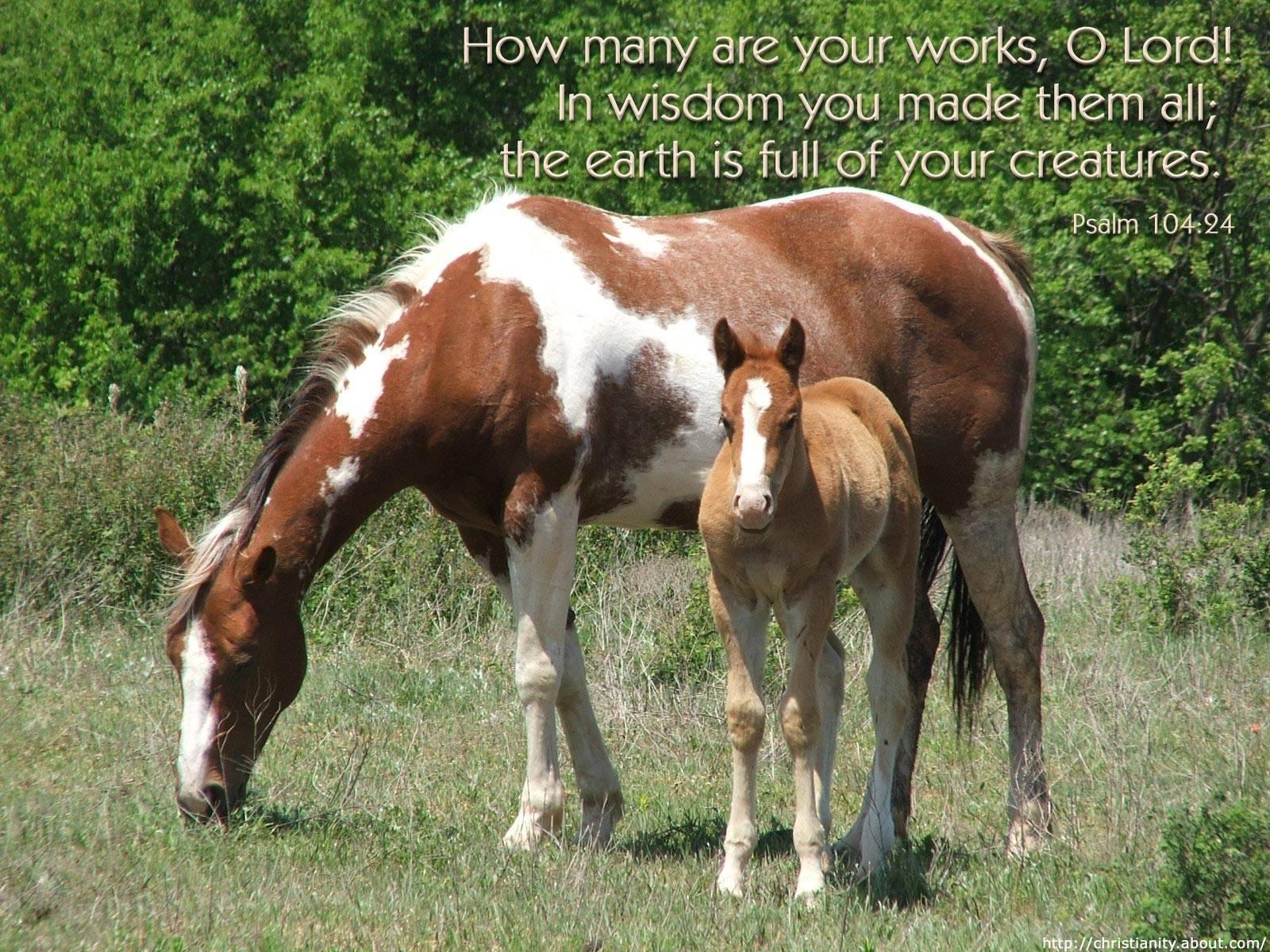 Christian Horse Quotes. QuotesGram