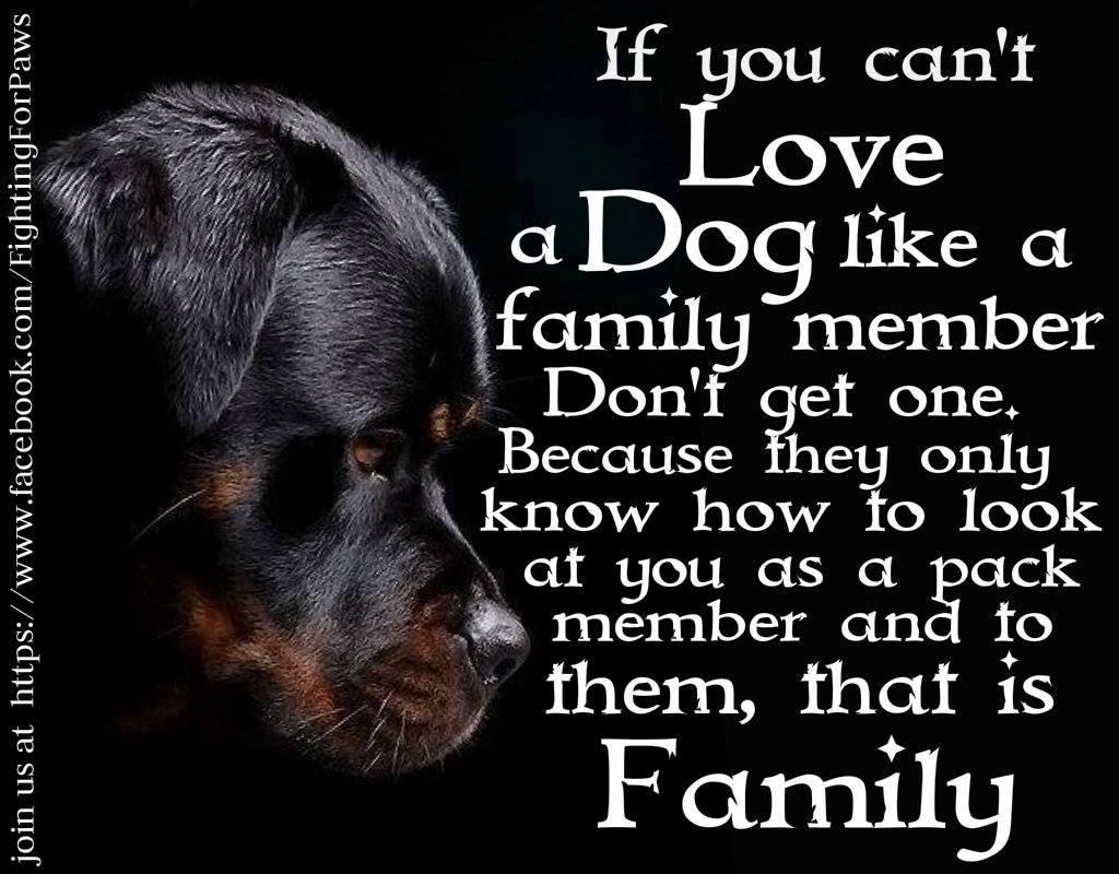 When A Dog Dies Quotes Quotesgram: Happy Humans Dog Quotes. QuotesGram
