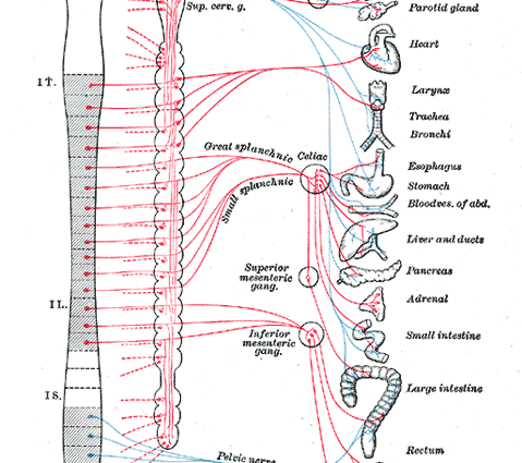 central nervous system quotes. quotesgram dna diagram labeled