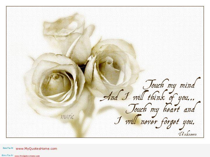 White Rose Flower Quotes Quotesgram