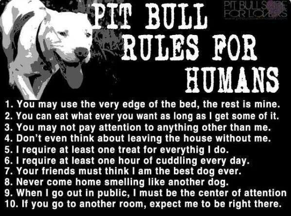 Funny Bull Riding Quotes: Pit Bull Quotes About Love. QuotesGram