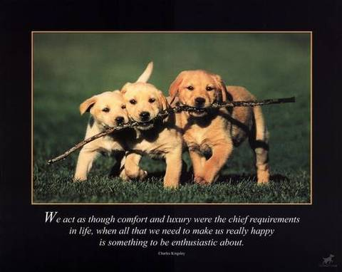 Marley And Me Quotes. QuotesGram  Marley And Me Q...