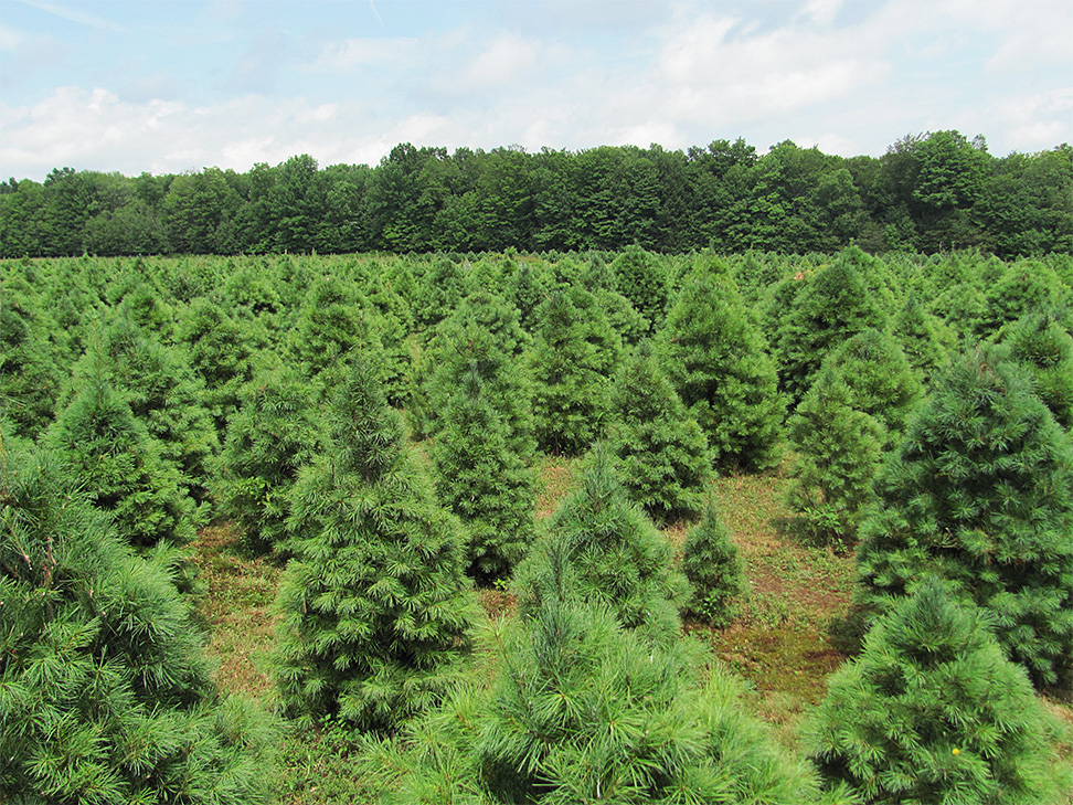 Find Christmas Tree Farm