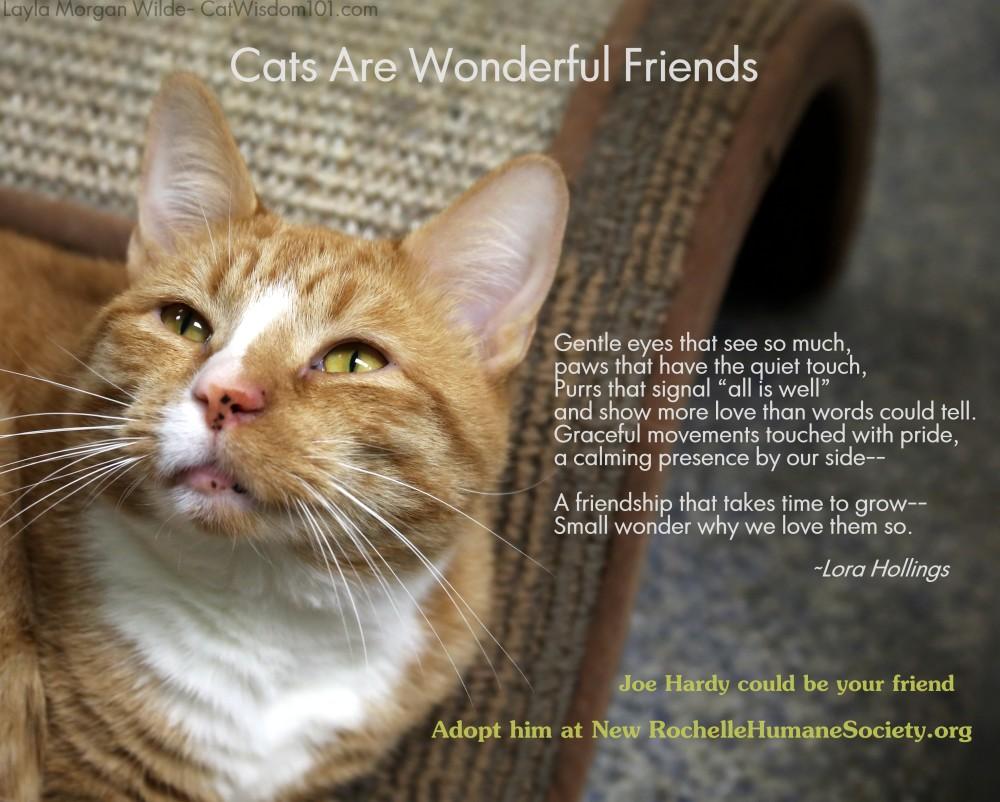Rescue Cats Quotes Quotesgram