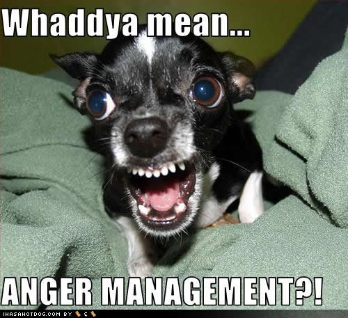 Hilarious Dog Quotes Quotesgram
