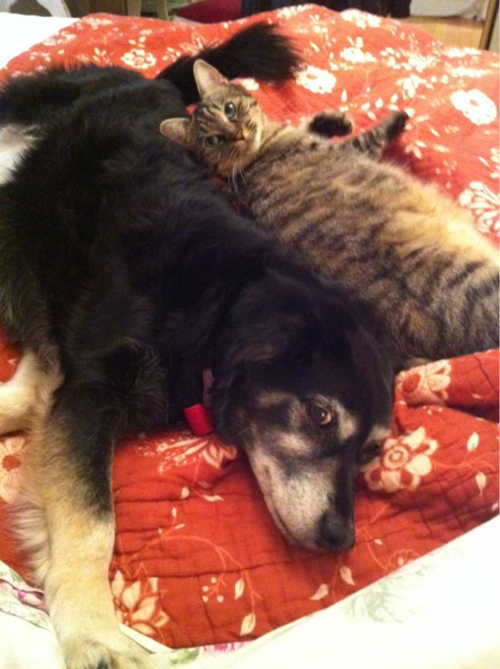 Quotes Dogs And Cats Living Together