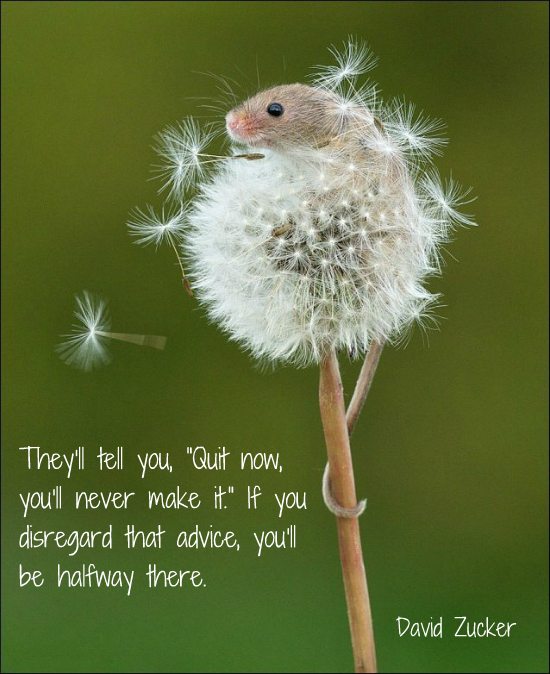https://cdn.quotesgram.com/img/38/63/926152426-Mouse_on_Dandelion_Quote.png