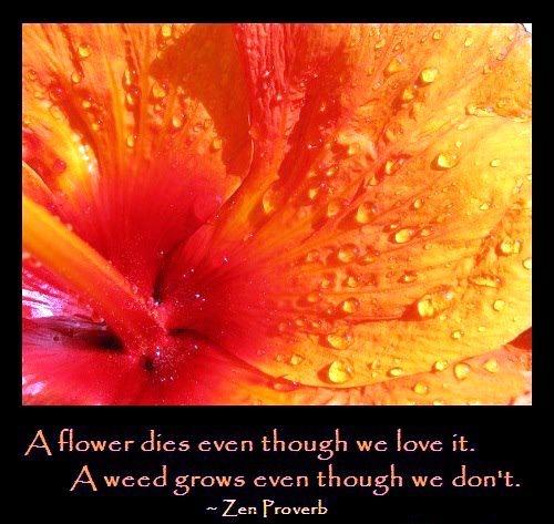 zen quotes about love quotesgram