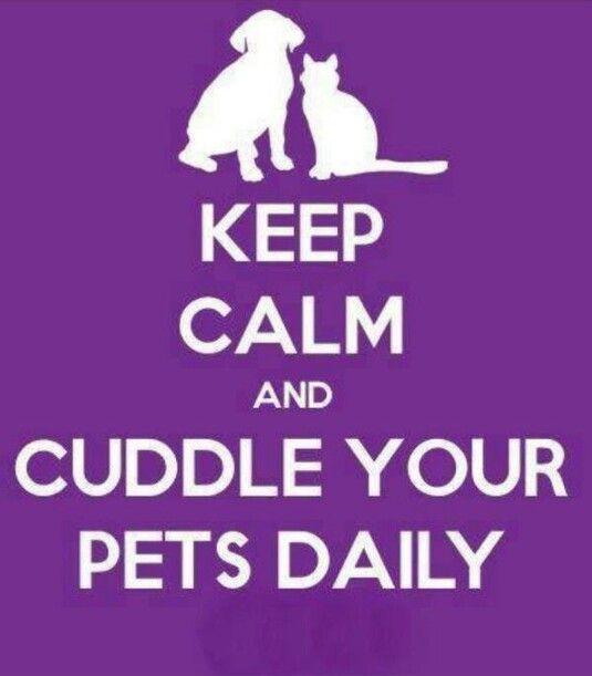 I Want To Cuddle With You Quotes: Cuddling Quotes With Your Dog. QuotesGram