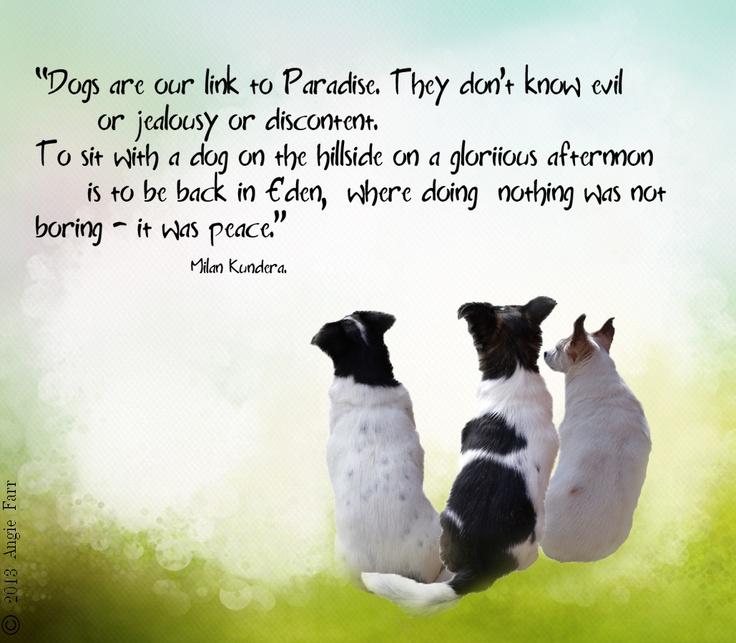Beloved Dog Quotes. QuotesGram