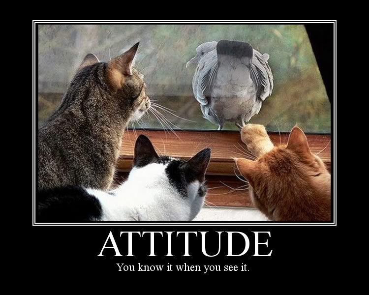 how to develop attitude in yourself