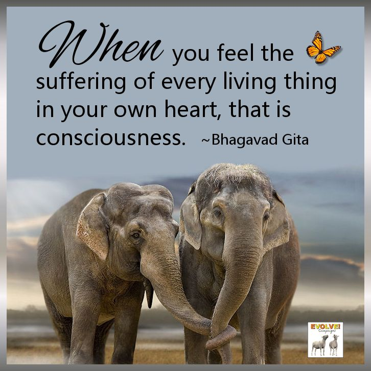 Ingredients of Personal Compassion