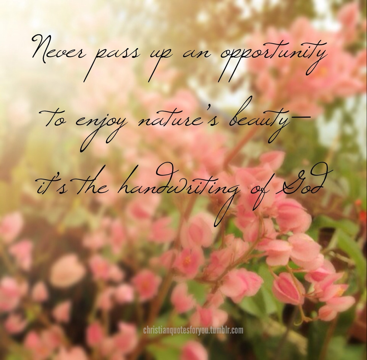 Bible Quotes About Nature Beauty. QuotesGram