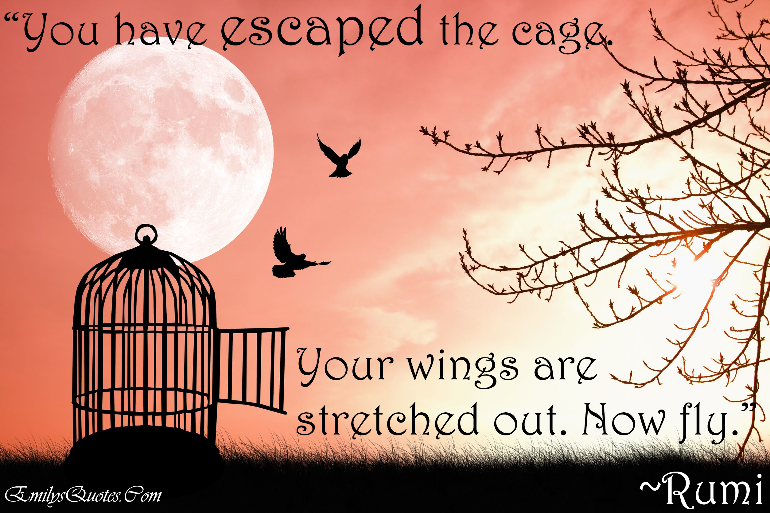 Quotes About Chicken Wings Quotesgram: Inspirational Quotes About Wings. QuotesGram