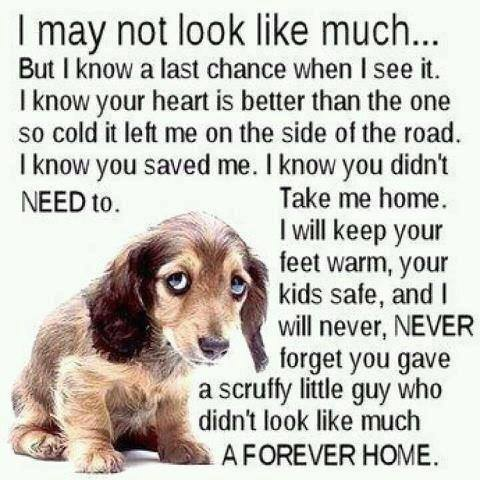 Homeless Dog Quotes And Sayings Quotesgram