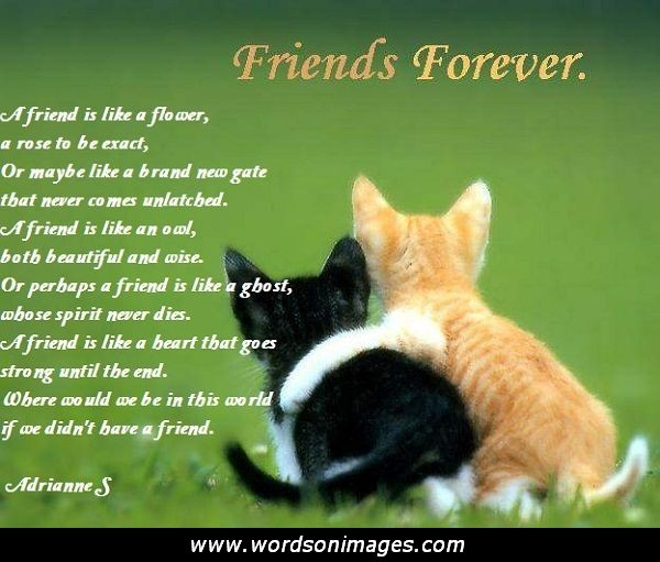 Funny Friendship Day Quotes: Valentine Friendship Quotes. QuotesGram