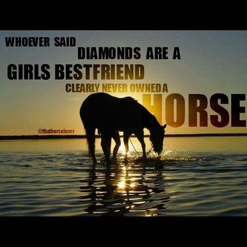 barrel racing quotes tumblr - photo #42