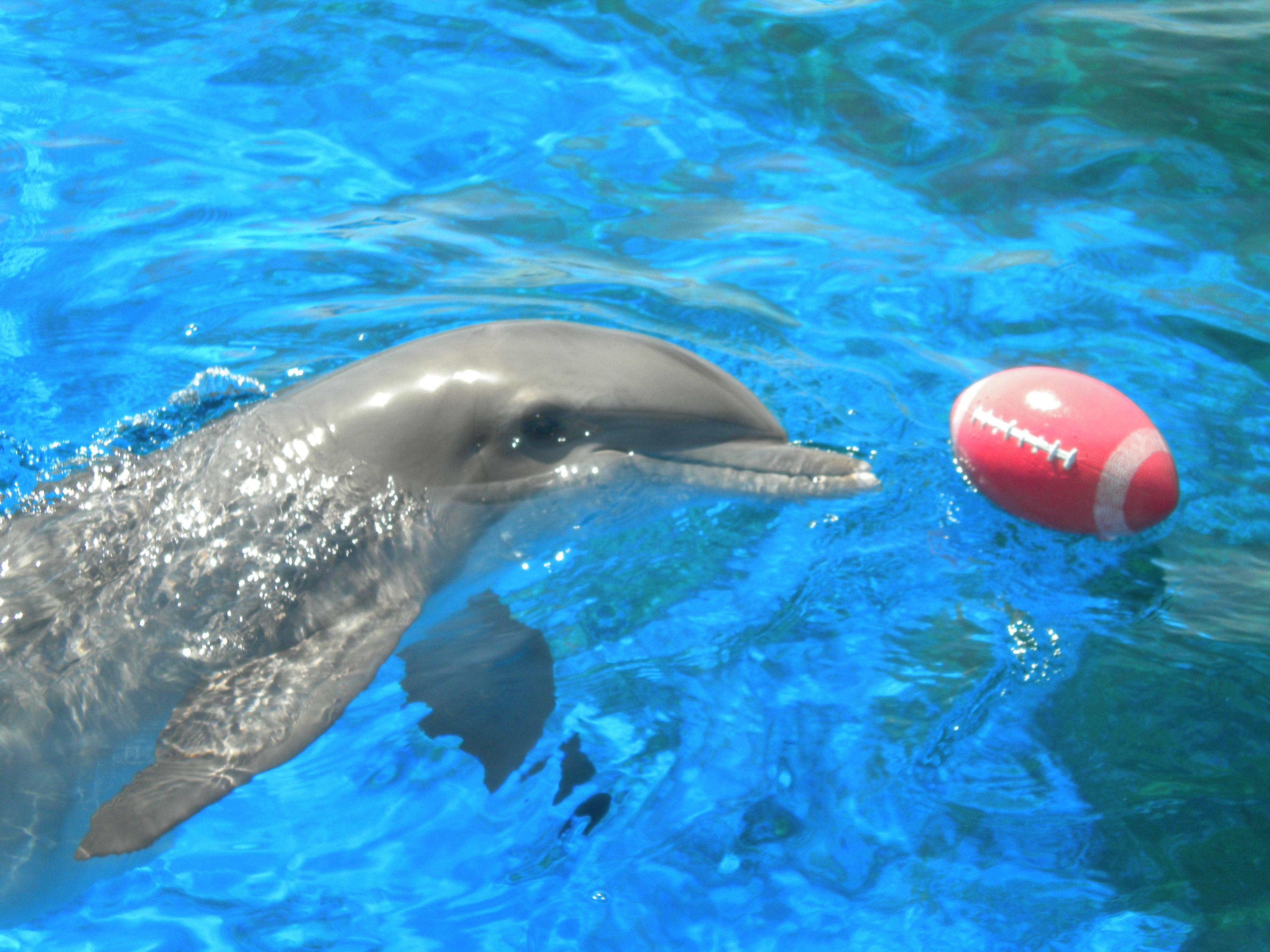 настолько красива, фото дельфин мерцающий что увидела, невероятно