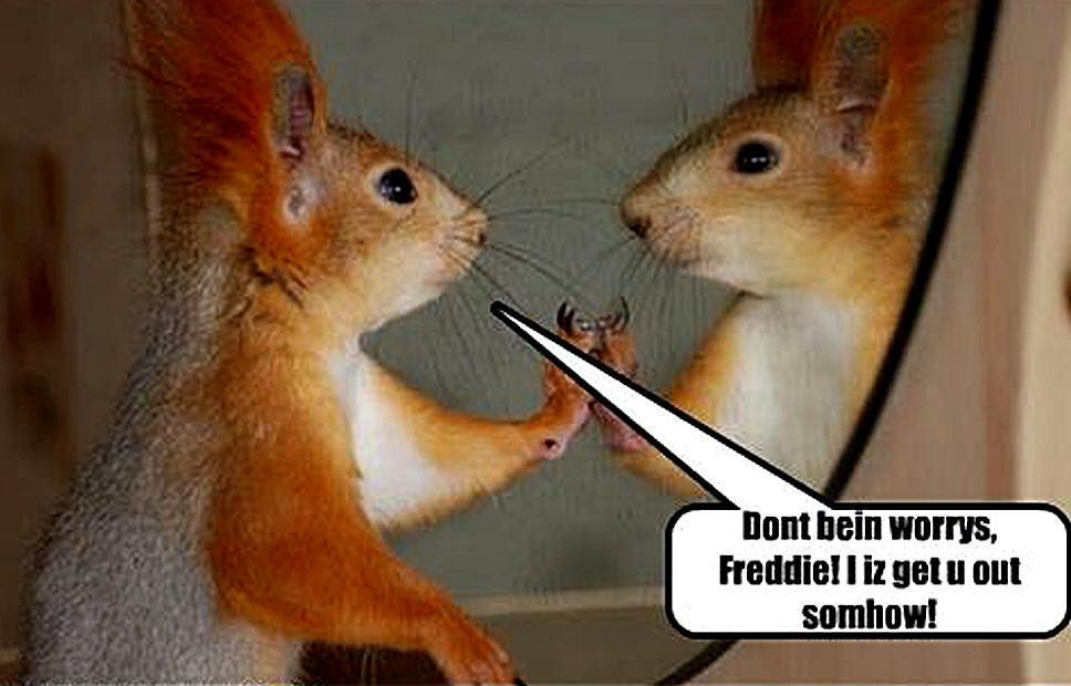 Cute squirrel quotes quotesgram - Funny squirrel backgrounds ...