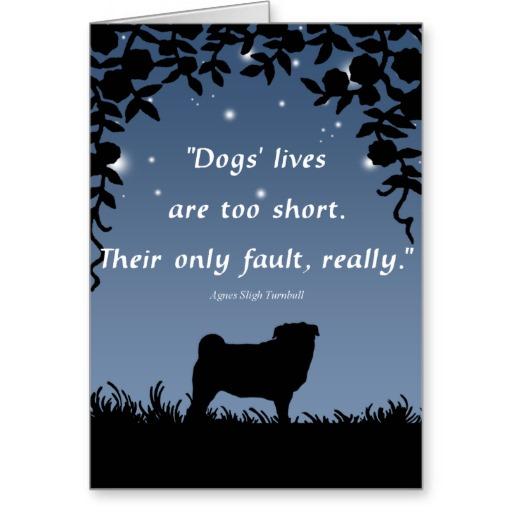 pug dog sympathy quotes  quotesgram