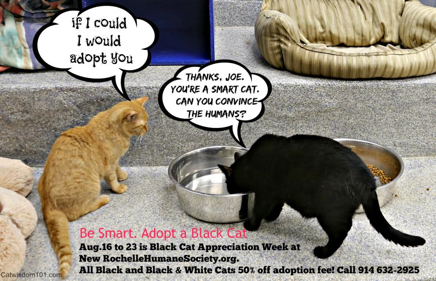 Spot Cat Adoption