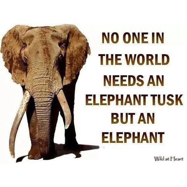 elephant friendship quotes quotesgram