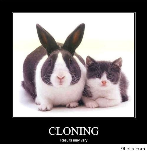 the continuing debate over human cloning Is human cloning ethical  i believe that cloning human embryo's is a small step for man,  concern over human cloning claims.