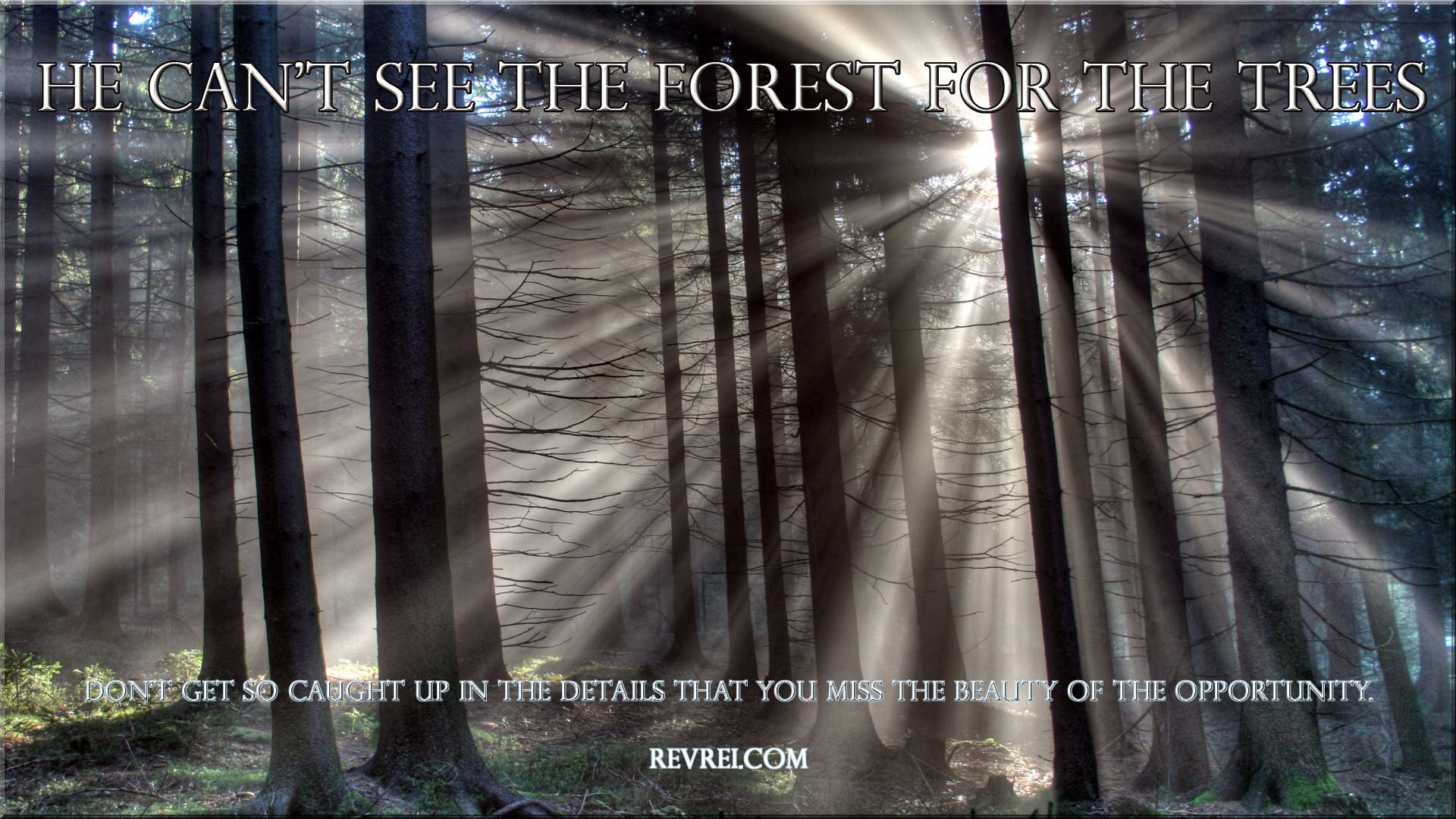 Fastest Saying You Can't See The Forest For The Trees